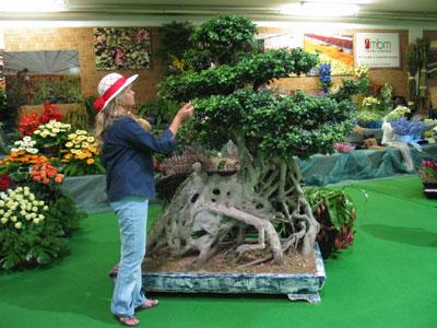 Bonsai taringa - Como cultivar bonsai ...